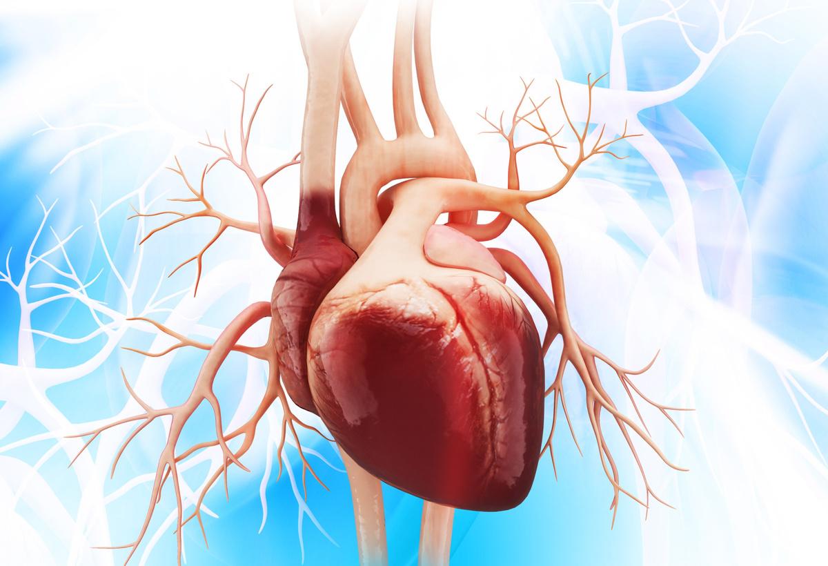 Cardiac Septal Occluder Technology