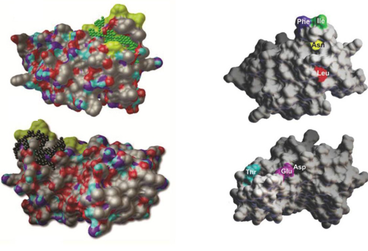 Anti-HCV Selective High Affinity Ligands to Block HCV E2-CD81 Interaction