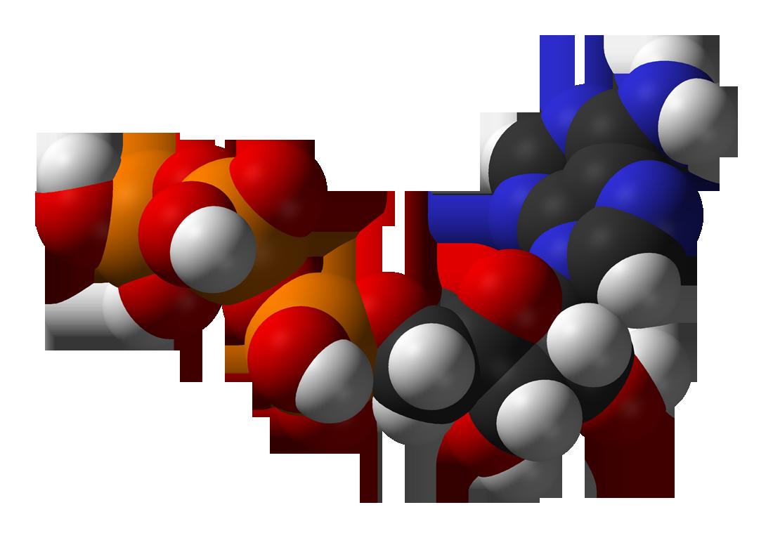 Nucleoside Triphosphate Regeneration System