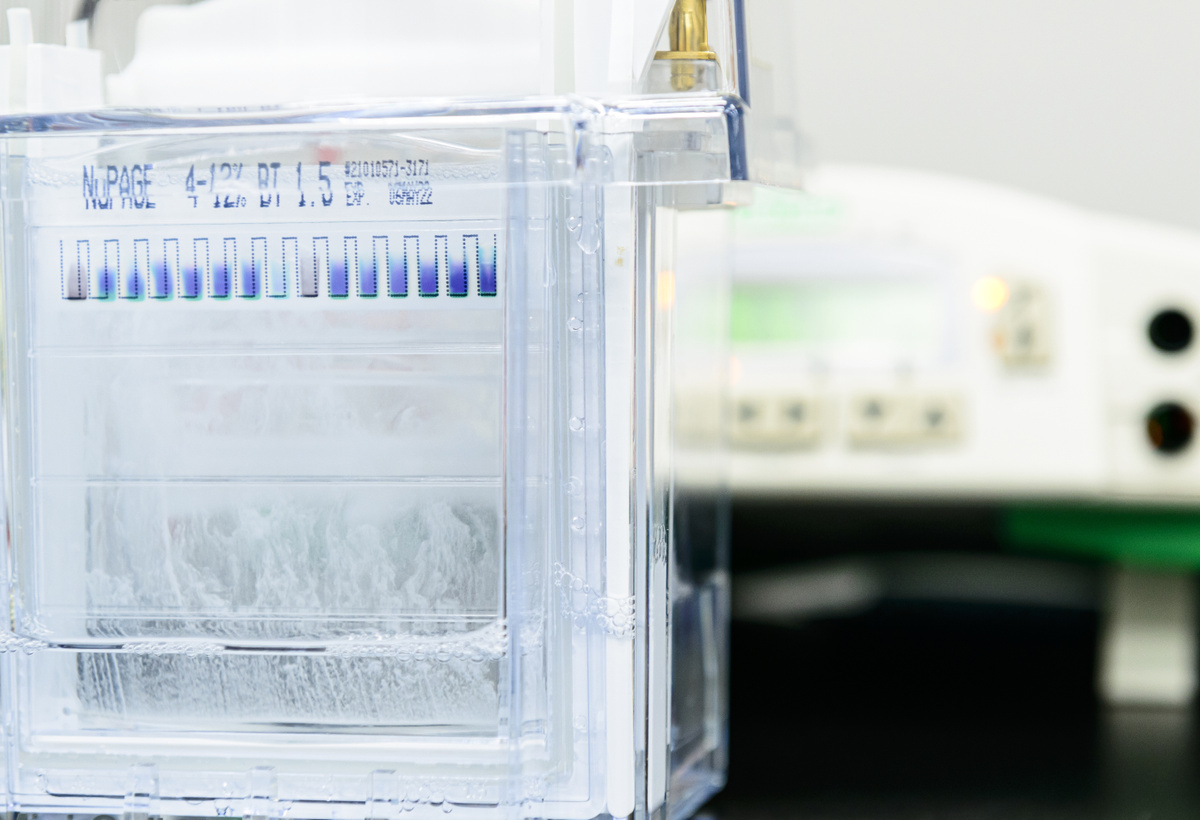 High-Yield Protein Purification Tag
