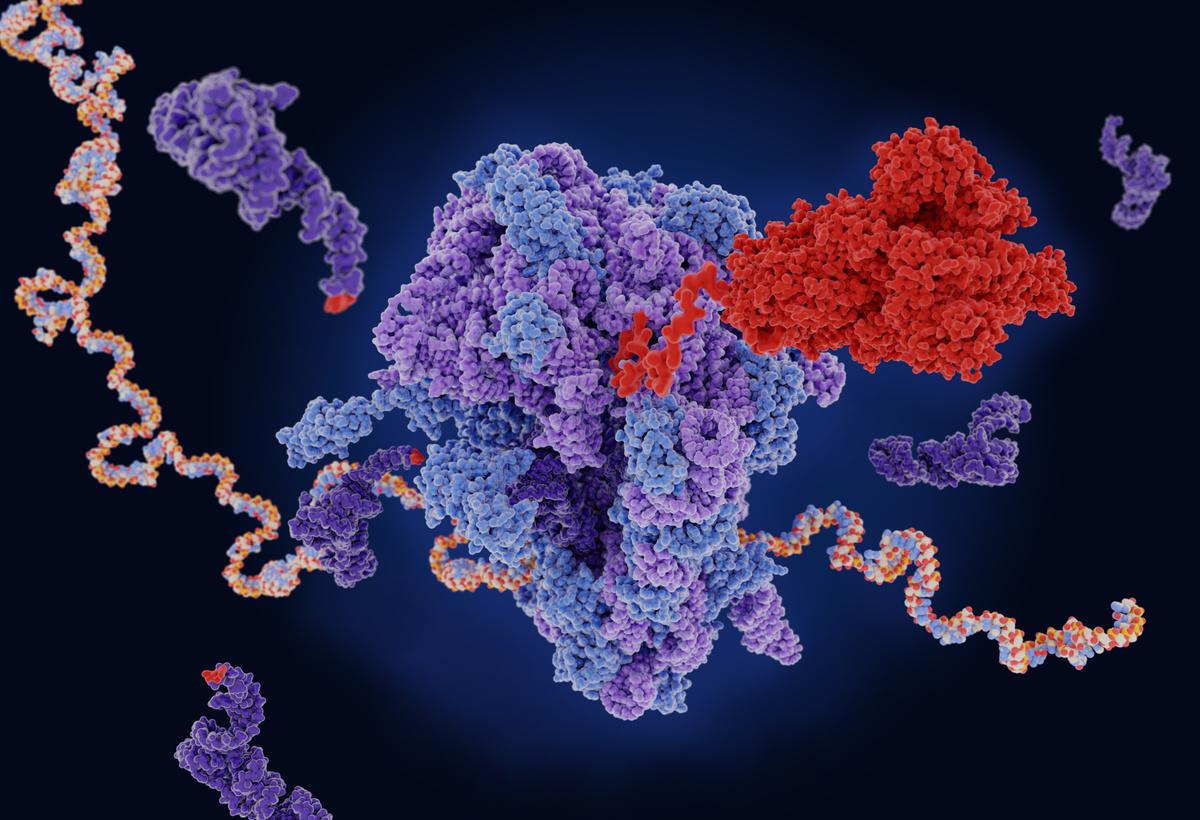 Stabilised RNA Therapeutics