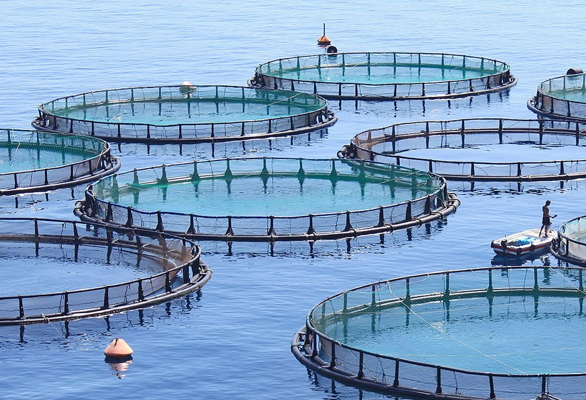 Tastemasking Aquaculture Fish-Food Formulation