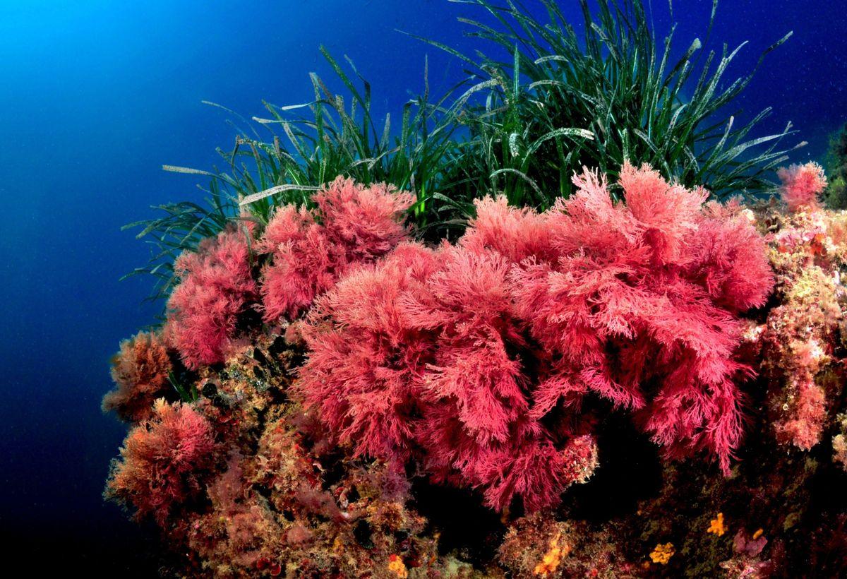 Nanoencapsulation of Jania rubens Seaweed's Antioxidants for Food Applications