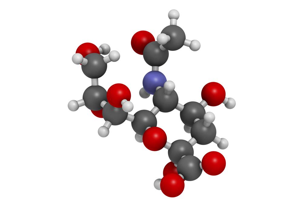 Sugar Recognition Molecules