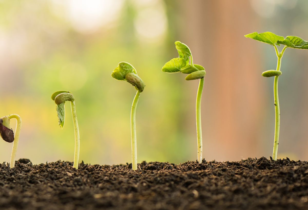 Plant Growth Promoting Compounds