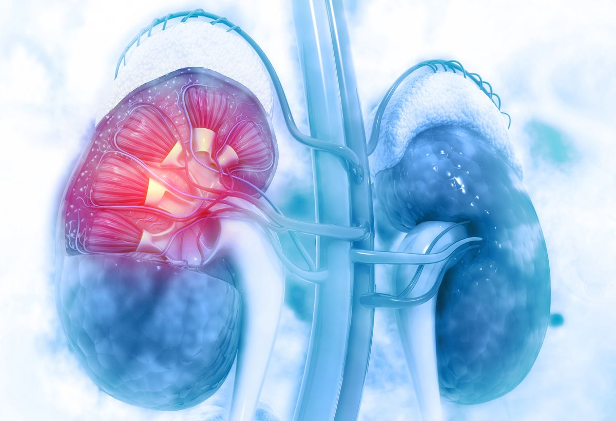 Novel Predictive Biomarker for Early Detection of Kidney Damage