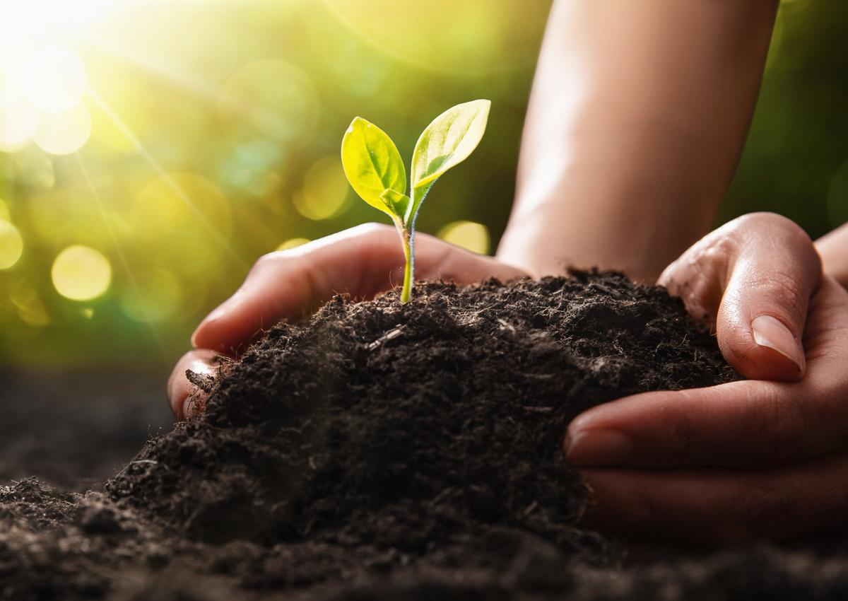 Seeking Novel Gene Regulatory Elements with Data to Confirm Efficacy in Plants