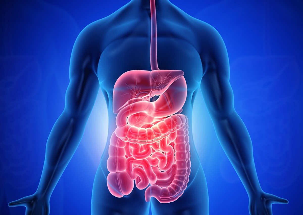 Seeking Phenotypic Cellular Assays Relating to Gastroenterology